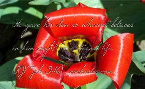 John 3:16 This Is How God Loves