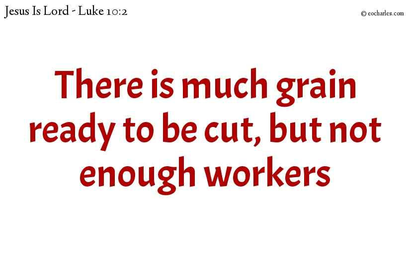 There is much grain ready to be cut, but not enough workers