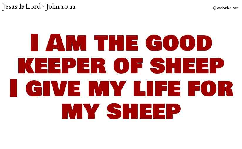 I Am the good keeper of sheepI give my life for my sheep