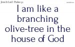 Like a branching olive-tree in the house of God
