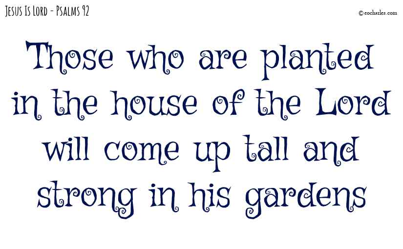 Planted in the house of the Lord