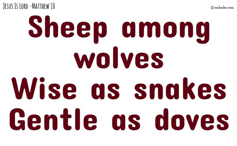 Sheep among wolves